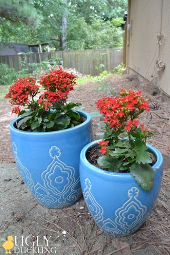 new red potted plants in the back yard