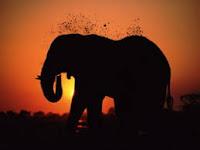 Il grande elefante