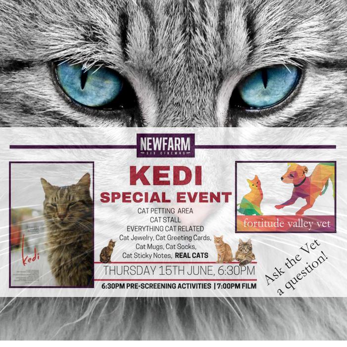 KEDI movie New Farm Cinema Fortitude Valley Vet movie launch cat kitten