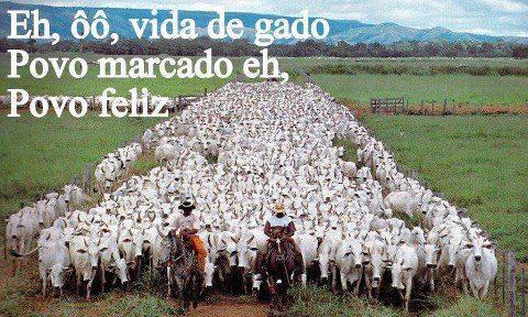 Resultado de imagem para charge vida de gado