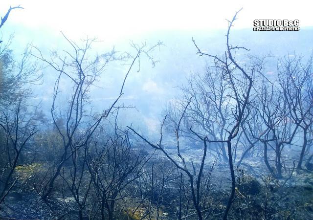 Πλήρης κατάσβεση της πυρκαγιάς στον Γαλατά Τροιζηνίας