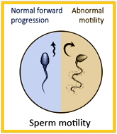 motilitas sperma