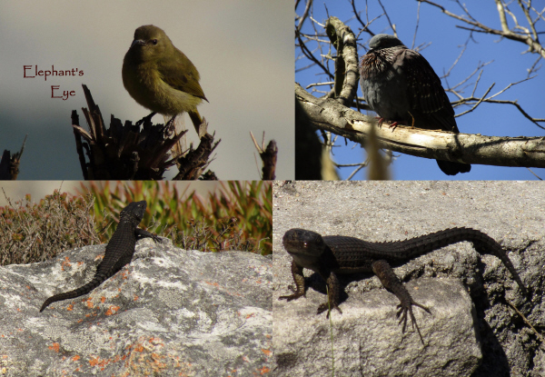 Birds and lizards at Silvermine