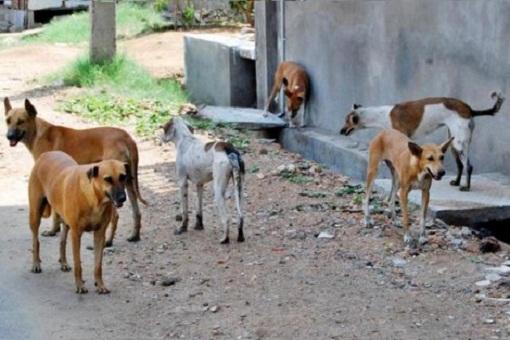 اولاد برحيل - بعد تعرض بعض المواطنين لهجمات… حملة للتصدي للحيوانات الضالة