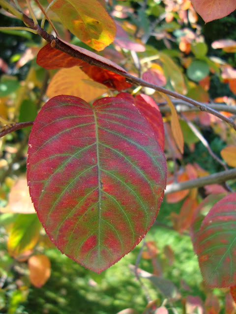 Un piccolo giardino in citt i colori dell 39 autunno in - Immagine di lucertola a colori ...