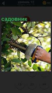 Подрезка и равнение кустов садовником специальным механизмом