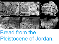 http://sciencythoughts.blogspot.com/2018/08/bread-from-pleistocene-of-jordan.html