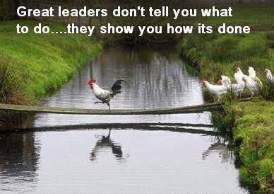 leader, great leader, chicken