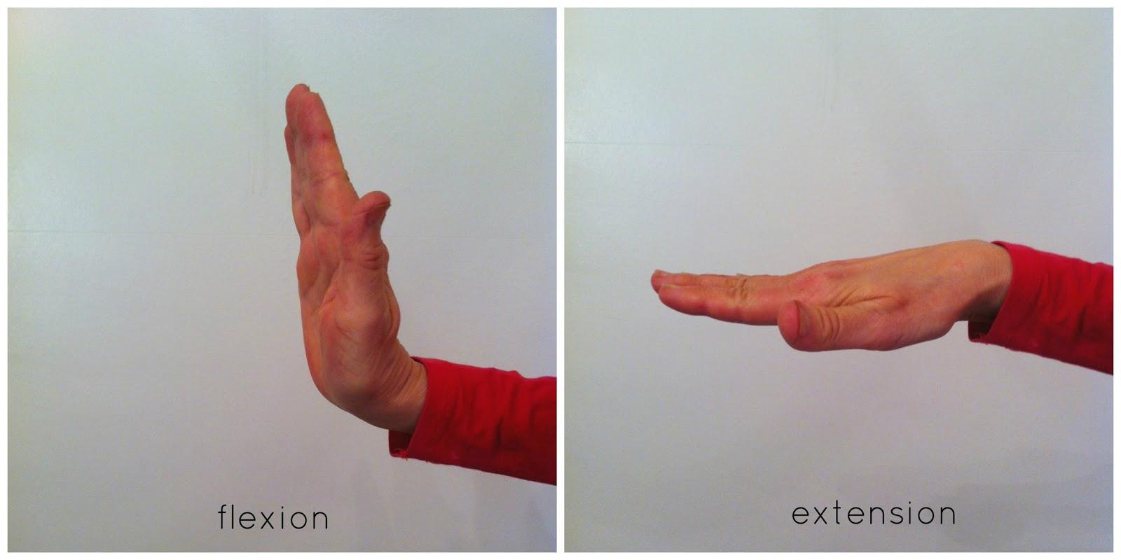 Flexiladies Yoga: Yoga anatomy bites- flexion and extension