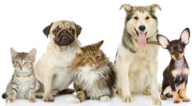 Types of Mouth Cancer in Dogs - Dogs Health Problems
