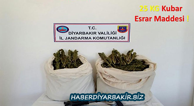 Diyarbakır'ın Hazro ve Kocaköy ilçelerinde 228 bin kök kenevir bitkisi ele geçirildi