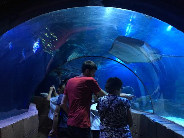 Wizyta w Sea Life Hannover