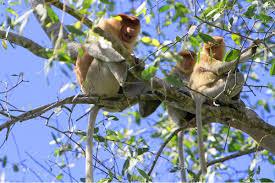 Wisata Alam Kalimantan