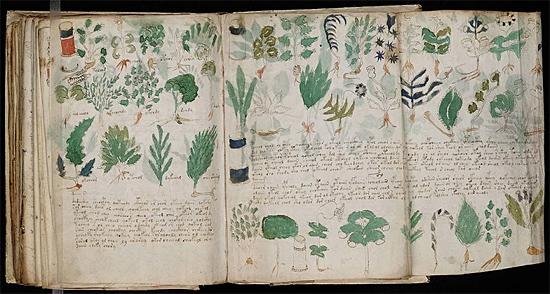 Manuscrito Voynich - Img 2