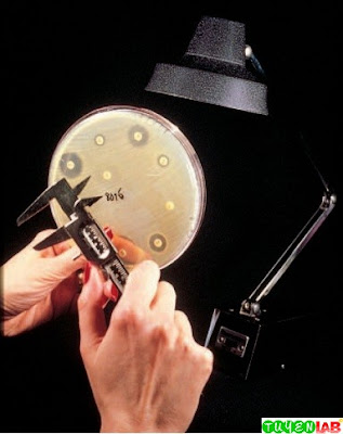 Disk diffusion tests for staphylococci with oxacillin (or methicillin or nafcillin) and vancomycin and for enterococci with vancomycin are examined by holding the plate up to a light source (transmitted light) for zone examination.