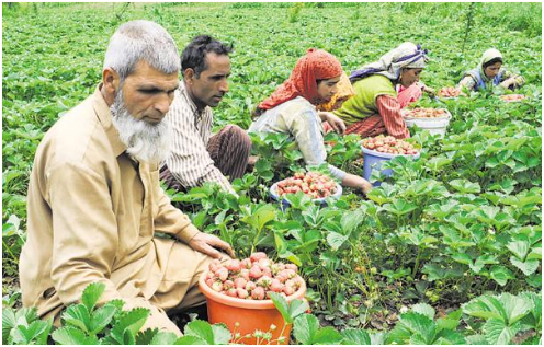 steps-to-enhance-income-of-farmers-in-paramnews-india