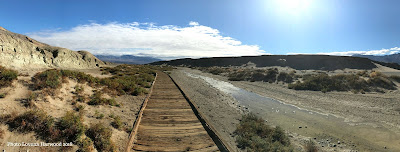 20 mule, salt creek, borax, death valley national park