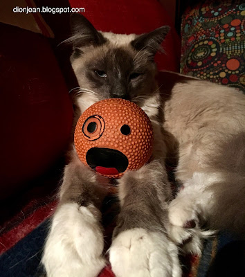 Fergus the cat with a dog toy