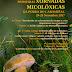 💡 Xornadas Micolóxicas da Pobra do Caramiñal | 24-26nov