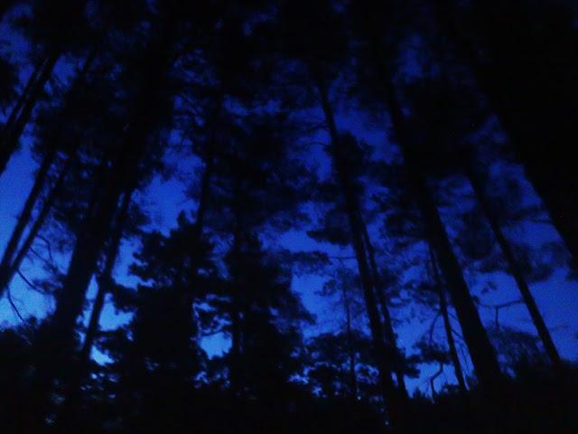 Nocne sosny w środkowej Bułgarii