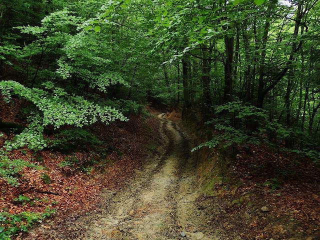 Początek szlaku od Jabłonicy