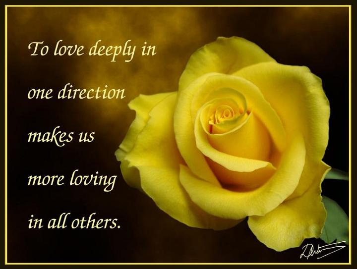 Photo Gallery Quotes About Flowers And Love Amazing Love Flower Quotes