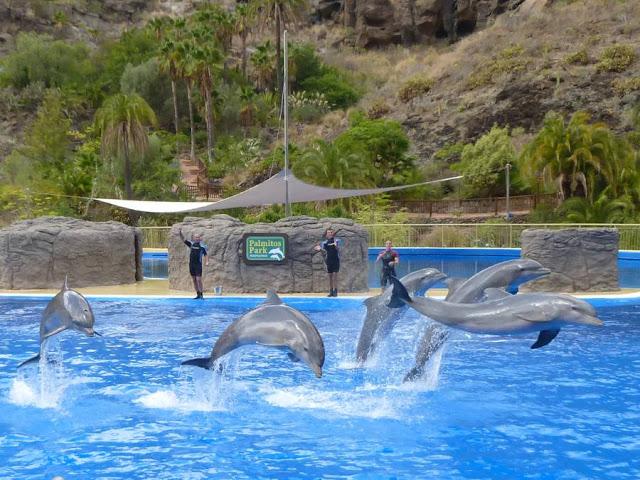 damazprowincji.blogspot.com, pokazy delfinów, gran canaria, wyspy kanaryjskie