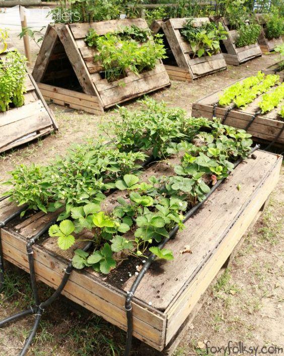 Beautiful pallet gardening ideas boo gardening - Garden ideas with pallets ...
