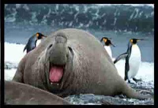 Top 12 Heaviest Animals In The World
