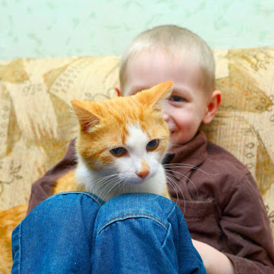 A happy boy with a ginger-and-white cat on his lap