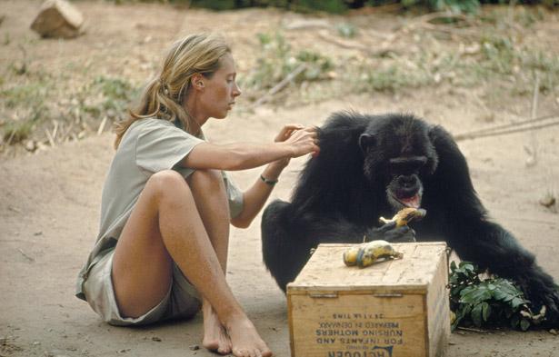 Head-to-toe khaki and a stuffed chimpanzee