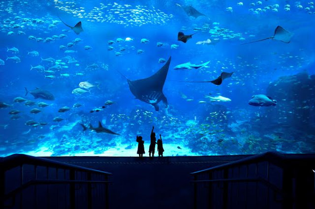 South East Asia Aquarium