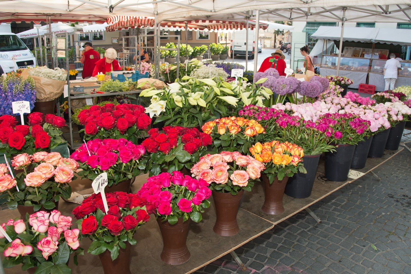 Bad Cannstatt Info: Blumen Steinle