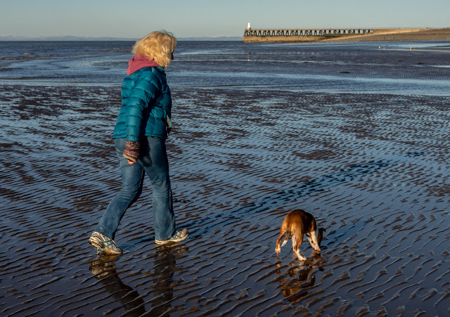 PHoto of Ruby trotting along beside me on the wet sand at Maryport