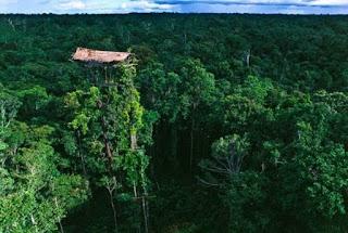 rumah adat sumatera suku korowai dibangun di atas pohon.