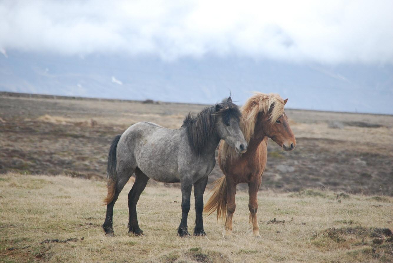 Fonds d 39 cran cheval gratuit fond d 39 cran hd for Fond d ecran 6k
