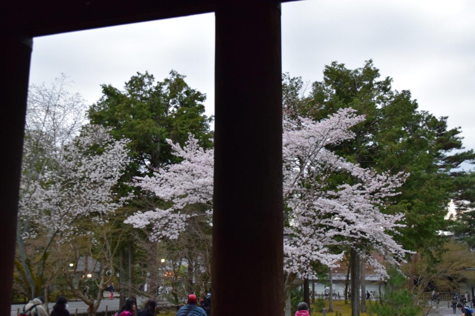 Sakura Nanzenji