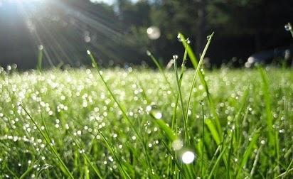 Manfaat udara bagi kehidupan di bumi sangat penting Manfaat udara bagi kehidupan