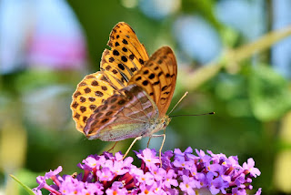 20 Inspirational Butterfly Quotes About Life