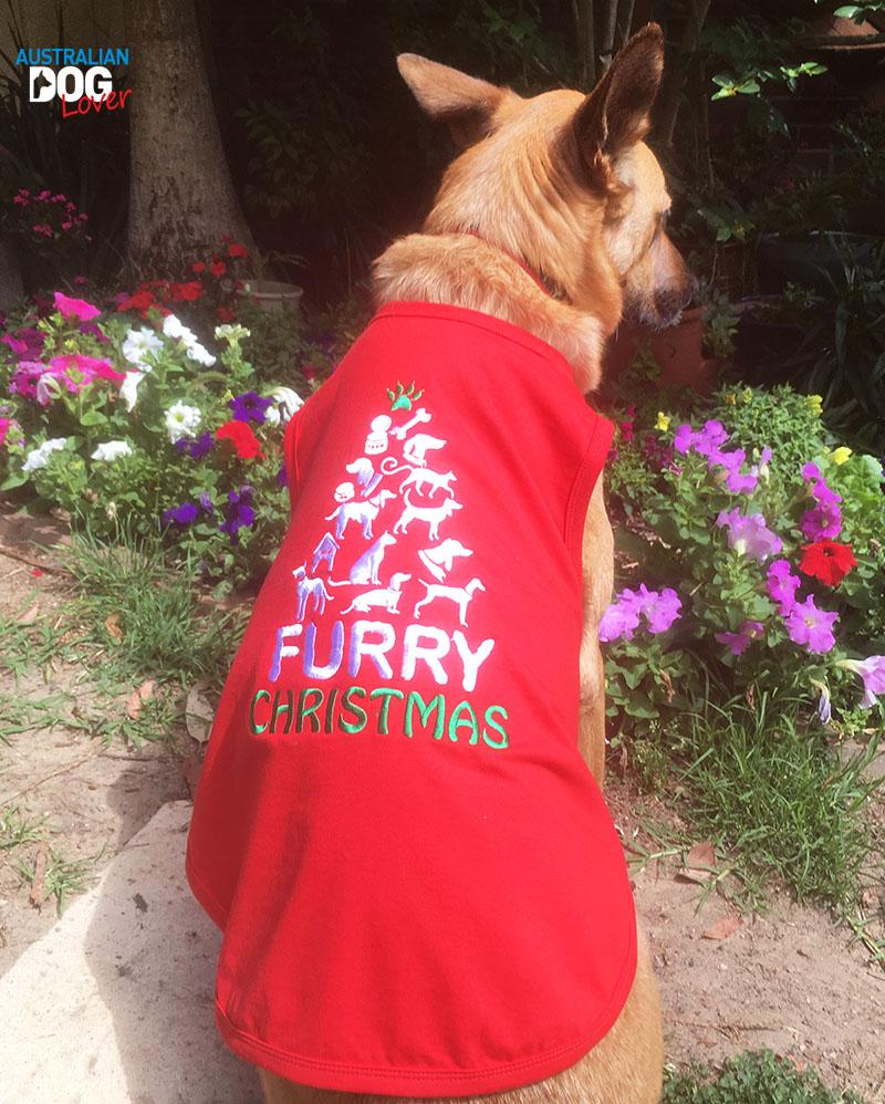 20 christmas gift ideas for your dogs australian dog lover