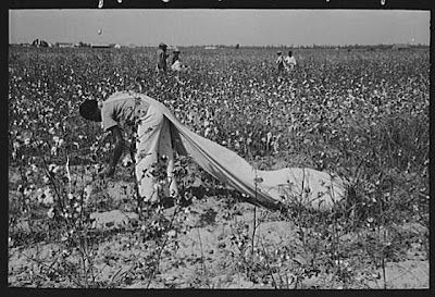 Image result for cotton nigger