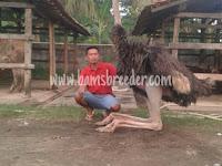 Burung Unta / Ostrich