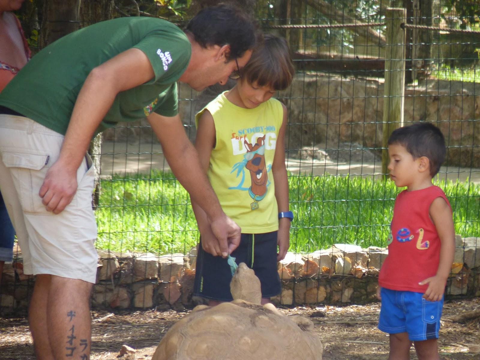 Krazy World, Izan alimentando a la gran tortuga.