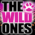 The Wild Ones, Top 40's Cover Band at The Nutty Irishman Saturday December 17th