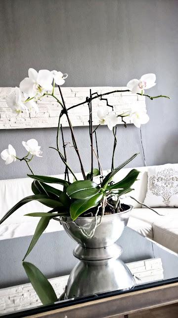 Haushaltstipps_Mit Pflanzen elegant dekorieren