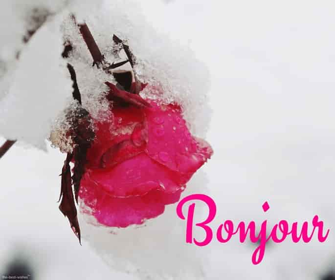 bonjour with red rose
