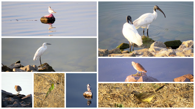 Bird Watching at Jayakwadi Dam, Paithan