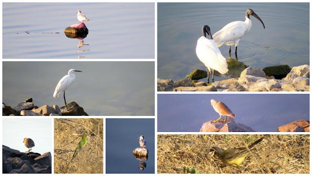 Bird Watching at Jayakwadi Dam, Paithan