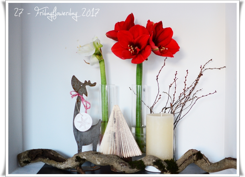 amaryllis an weihnachten und f r den fridayflowerday. Black Bedroom Furniture Sets. Home Design Ideas