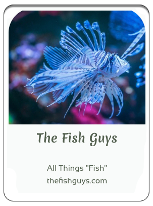 The Fish Guys